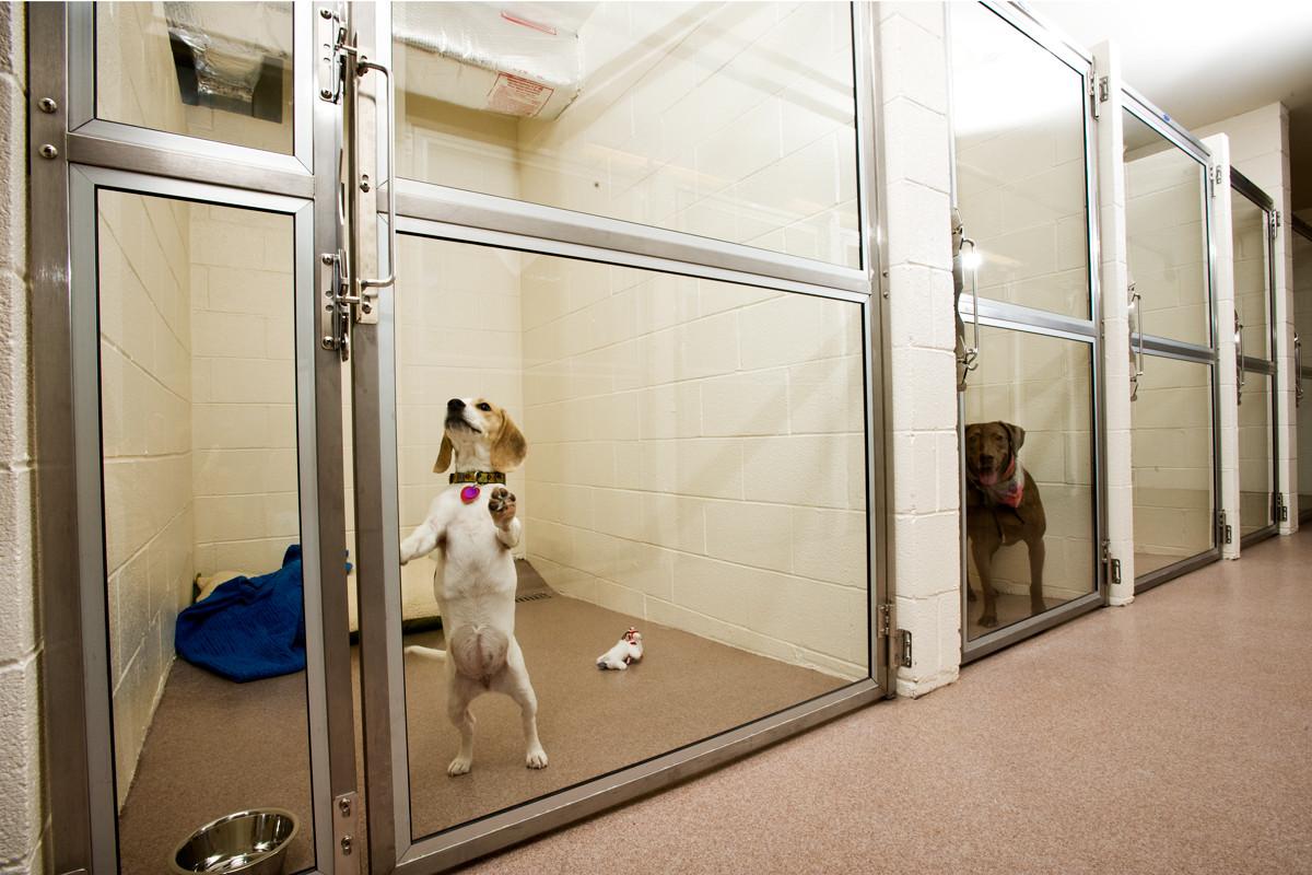 Гостиница для собак.