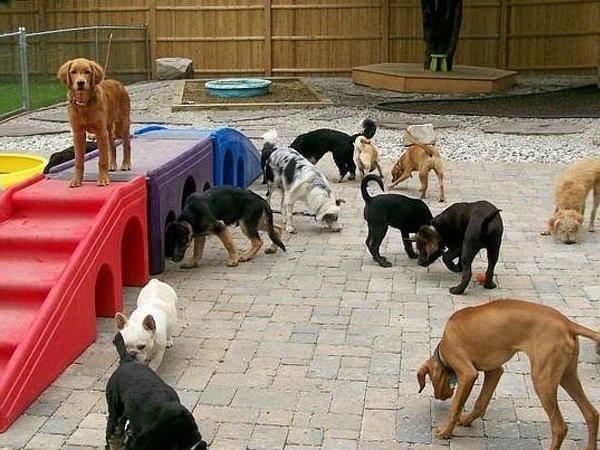 Детский садик для собак.