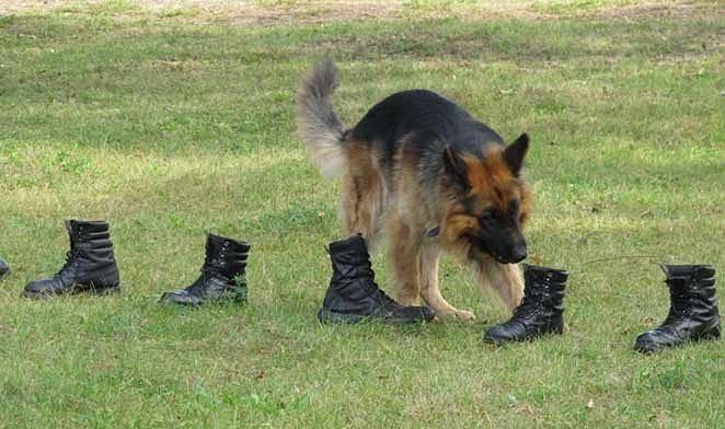 Защитно-караульная служба (ЗКС)