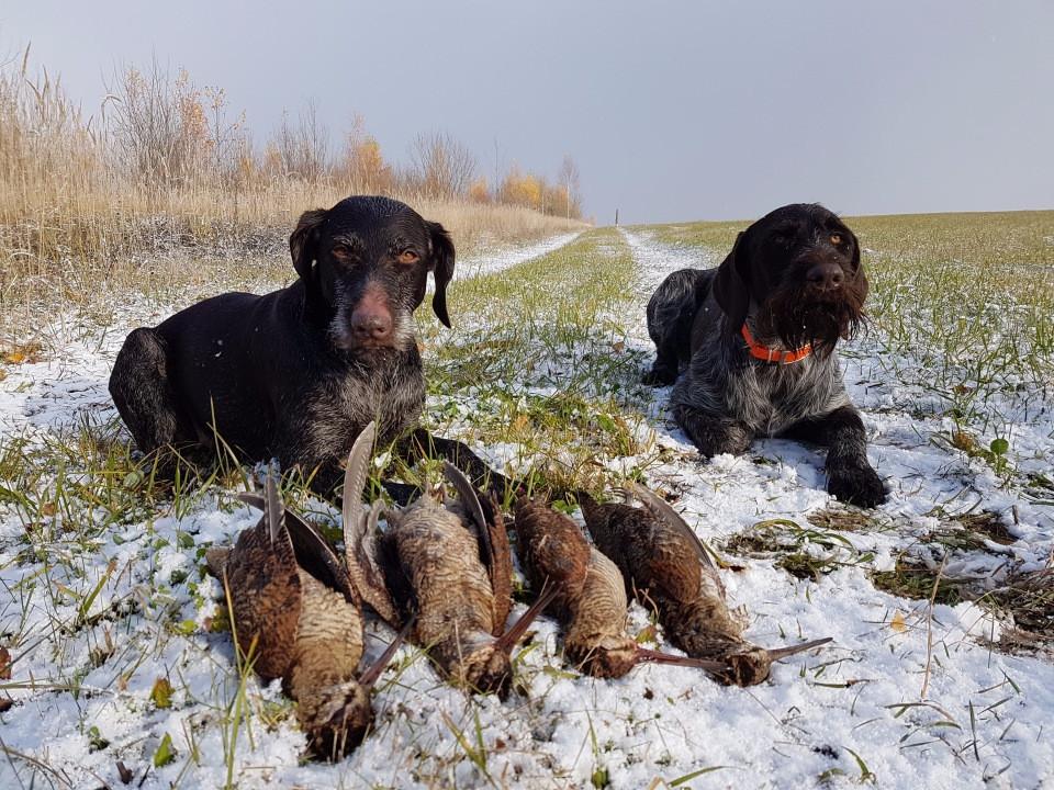 Начальная дрессировка охотничьей собаки